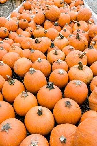 real pumpkins wp